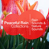Peaceful Rain Collections by Rain Sounds
