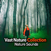 Vast Nature Collection de Nature Sounds (1)