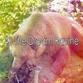 43 The Dream Ravine de Ocean Sounds Collection (1)