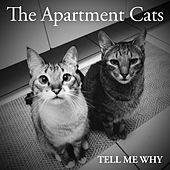 Tell Me Why (feat. Paula Indalecio) by The Apartment Cats