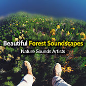 Beautiful Forest Soundscapes de Nature Sounds Artists