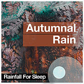 Autumnal Rain by Rainfall For Sleep