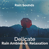 Delicate Rain Ambience: Relaxation by Rain Sounds