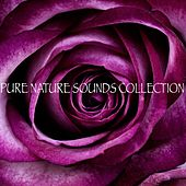 Pure Nature Sounds Collection by Nature Sounds (1)