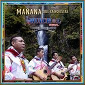 Mañana Que Ya No Estas de Huichol Musical