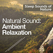 Natural Sound: Ambient Relaxation by Various Artists