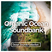 Organic Ocean Soundbank by Ocean Sounds Collection (1)