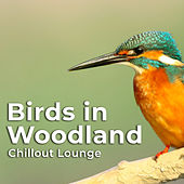 Birds in Woodland by Chillout Lounge