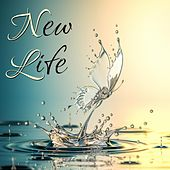 New Life by Matt Johnson
