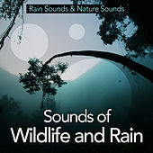 Sounds of Wildlife and Rain by Rain Sounds