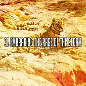 37 Embracing the Rage of the Storm by Rain Sounds and White Noise