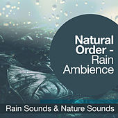 Natural Order - Rain Ambience by Rain Sounds