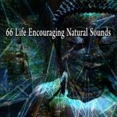 66 Life Encouraging Natural Sounds von Music For Meditation