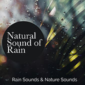 Natural Sound of Rain by Rain Sounds
