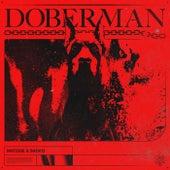 Doberman de Matisse