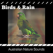 Birds & Rain von Various Artists
