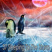 37 Sleeping to the Storm by Rain Sounds and White Noise