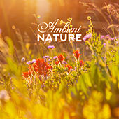 Ambient Nature: Perfect Relax Zone, Nature Sounds to Calm Down, Reduce Stress, Deep Meditation & Relaxation by Soothing Sounds
