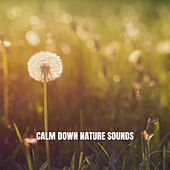 Calm Down Nature Sounds by Relaxing Rain Sounds