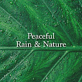Peaceful Rain & Nature by Rain Sounds