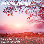 Nature Recordings - River in the forest by Nature Sounds (1)