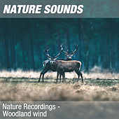 Nature Recordings - Woodland wind by Nature Sounds (1)
