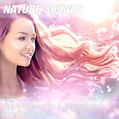 Nature Recordings & Brown Noise - Forest birdsongs by Nature Sounds (1)