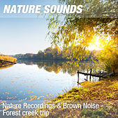 Nature Recordings & Brown Noise - Forest creek trip by Nature Sounds (1)