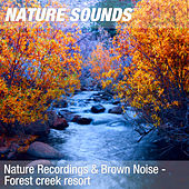 Nature Recordings & Brown Noise - Forest creek resort by Nature Sounds (1)