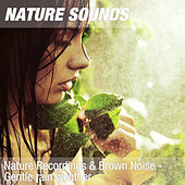 Nature Recordings & Brown Noise - Gentle rain weather by Nature Sounds (1)