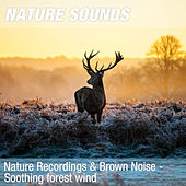 Nature Recordings & Brown Noise - Soothing forest wind by Nature Sounds (1)