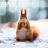 Nature Recordings & Brown Noise - Wind in the forest by Nature Sounds (1)