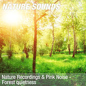 Nature Recordings & Pink Noise - Forest quietness by Nature Sounds (1)