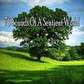76 Sounds of a Sentient World by Classical Study Music (1)