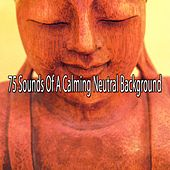 75 Sounds of a Calming Neutral Background by Massage Therapy Music