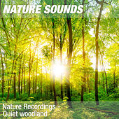 Nature Recordings - Quiet woodland by Nature Sounds (1)