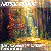 Nature Recordings & White Noise - Forest land creek by Nature Sounds (1)