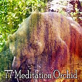 77 Meditation Orchid by Spa Relaxation