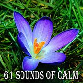 61 Sounds of Calm von Classical Study Music (1)
