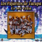 Es Mi Vida by Los Pajaritos De Tacupa