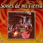Colección De Oro: Sones De Mi Tierra, Vol. 1 by Various Artists