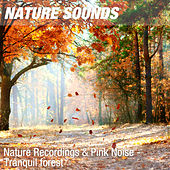 Nature Recordings & Pink Noise - Tranquil forest by Nature Sounds (1)