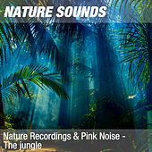 Nature Recordings & Pink Noise - The jungle by Nature Sounds (1)