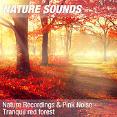 Nature Recordings & Pink Noise - Tranquil red forest by Nature Sounds (1)
