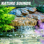 Nature Recordings - Tiny calming creek by Nature Sounds (1)