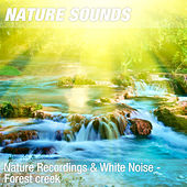 Nature Recordings & White Noise - Forest creek by Nature Sounds (1)