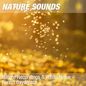 Nature Recordings & White Noise - Forest daydream by Nature Sounds (1)