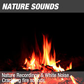 Nature Recordings & White Noise - Crackling fire sounds by Nature Sounds (1)