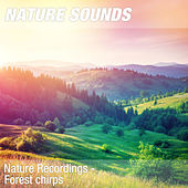 Nature Recordings - Forest chirps by Nature Sounds (1)