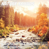 Nature Recordings & White Noise - Forest stream trip by Nature Sounds (1)